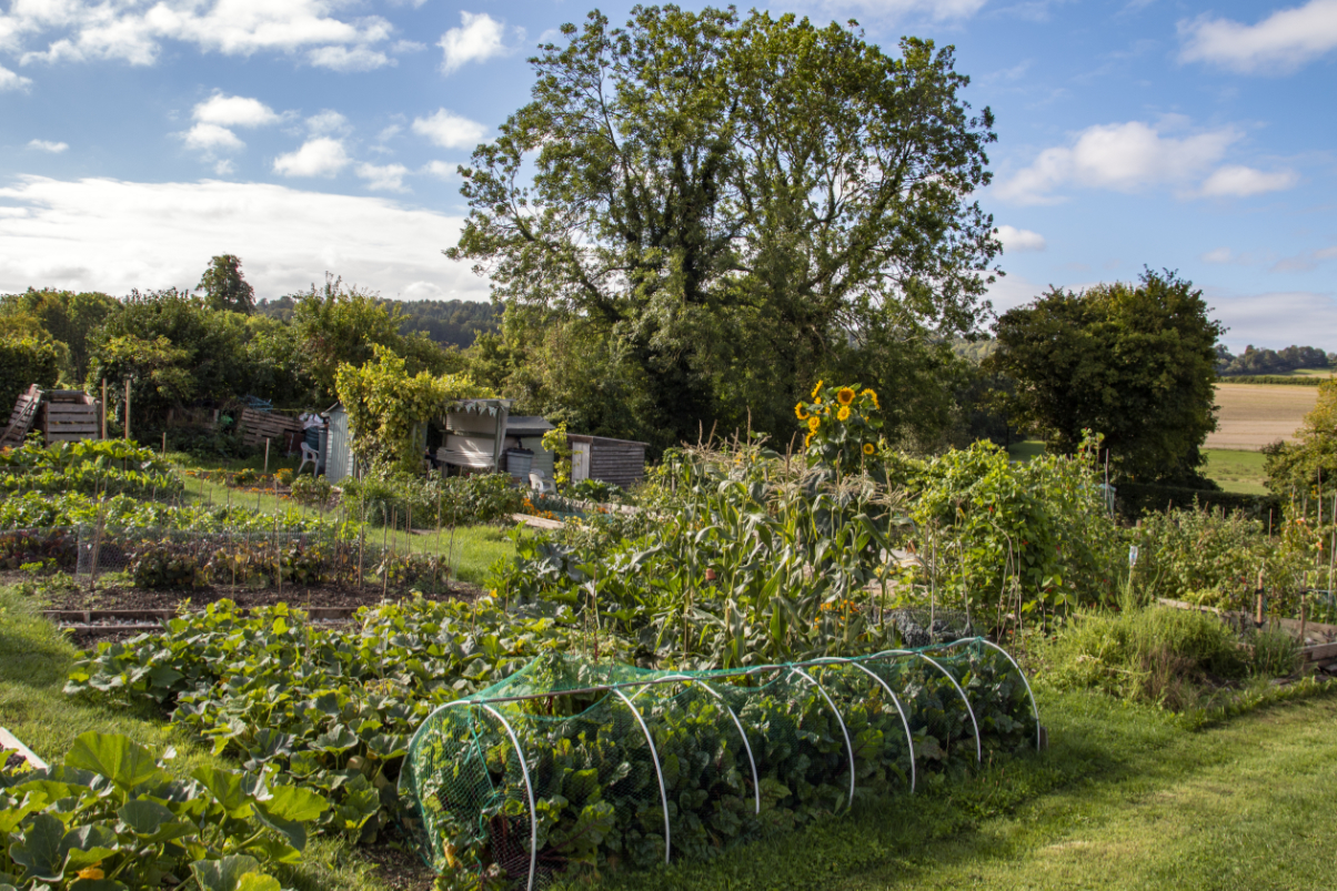 Allotments 1