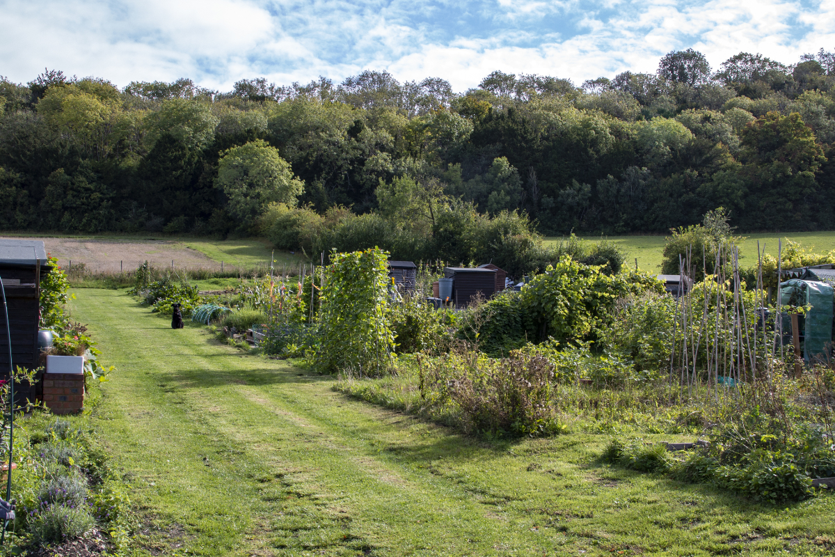 Allotments 2